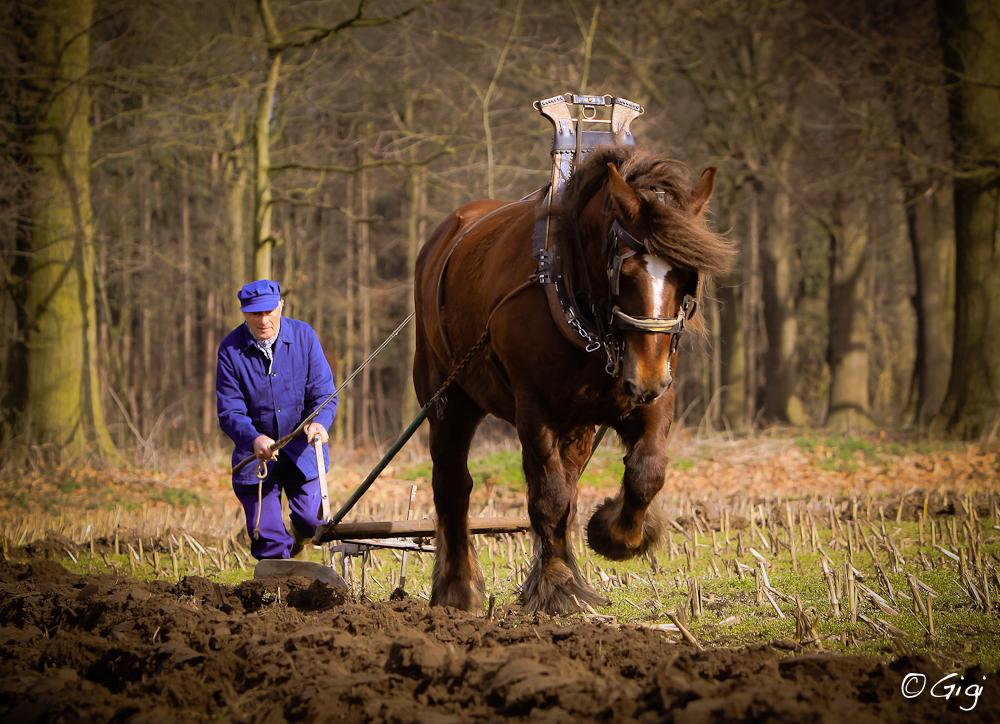картинка польза лошади для человека применению современных технологий