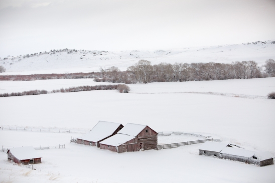 montana-snow-0734T