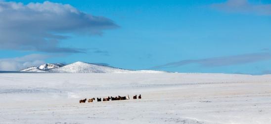 montana-snow-0744T