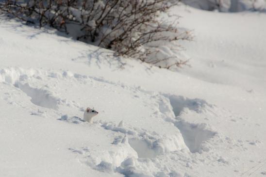 montana-snow-0764